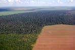 soybean encroaching into forest brazil
