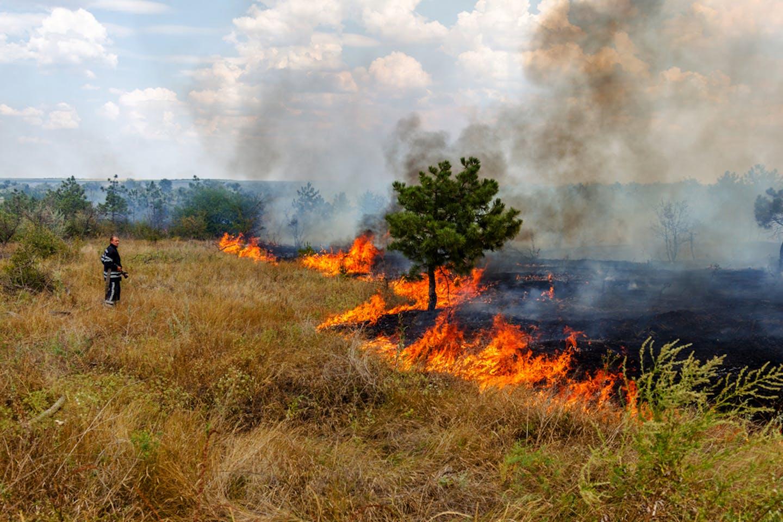 odessa ukraine forest fire