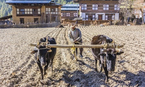 To build a greener economy, Bhutan wants to go organic by 2020