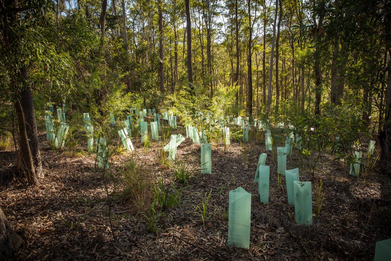new trees queensland