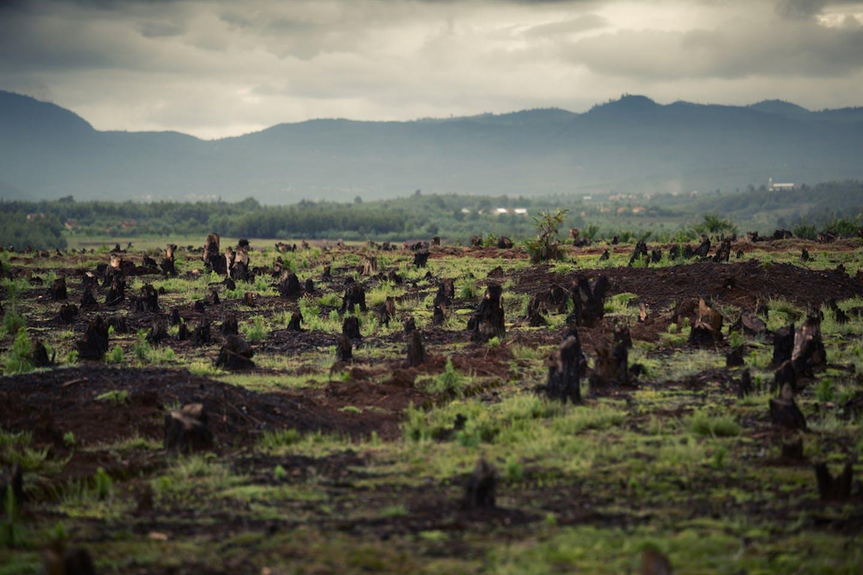 madacascar deforested