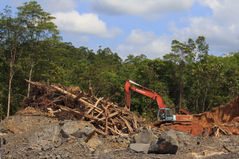 kuching deforestation