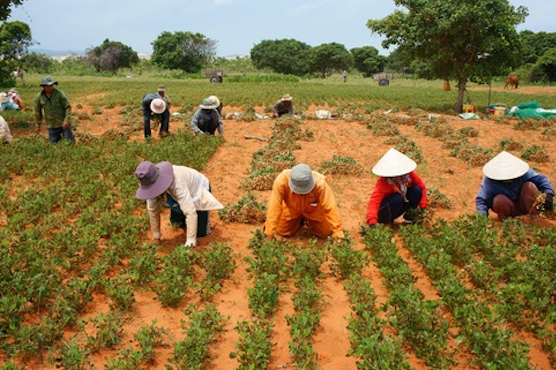 viet nam farmers