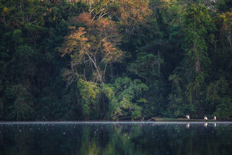 peru forest