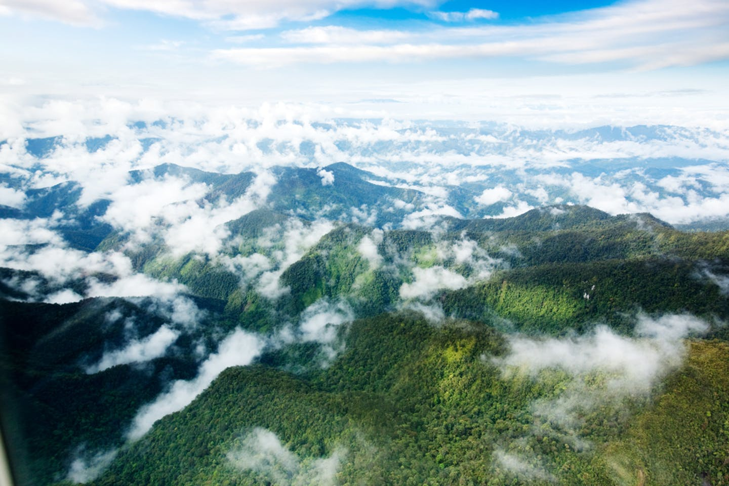 papua aerial forests