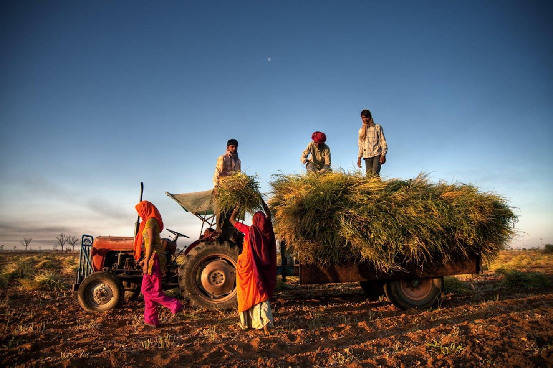 jaipur family of farmers