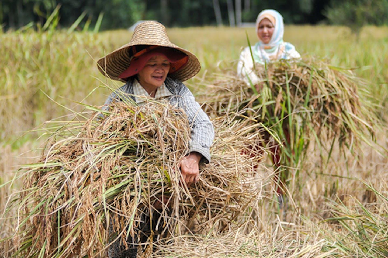women farmers sabah