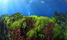 Seeds of doubt over iron boost for algae