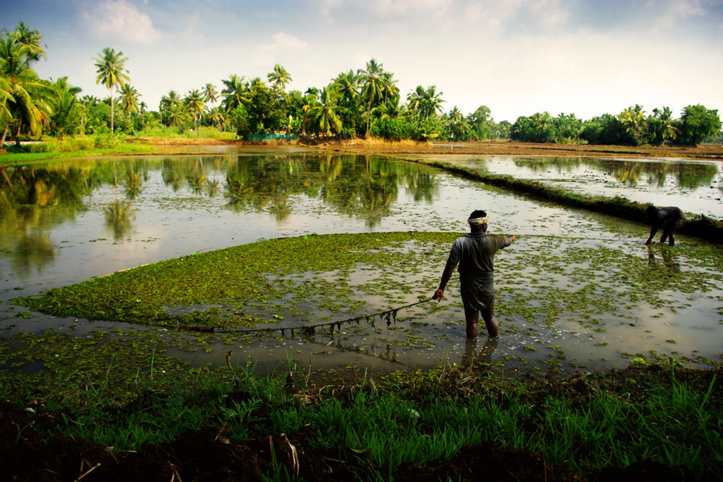 rice cultivation kerala