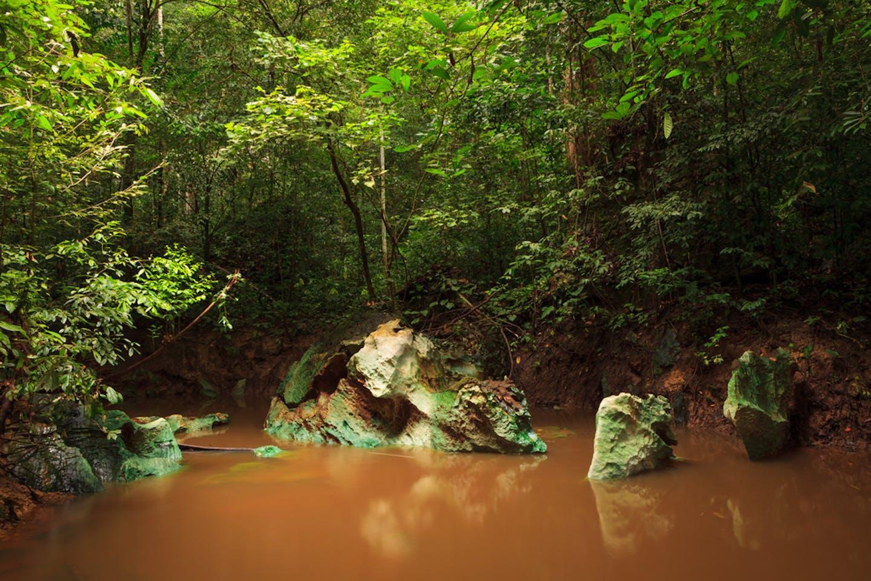 jungle stream borneo