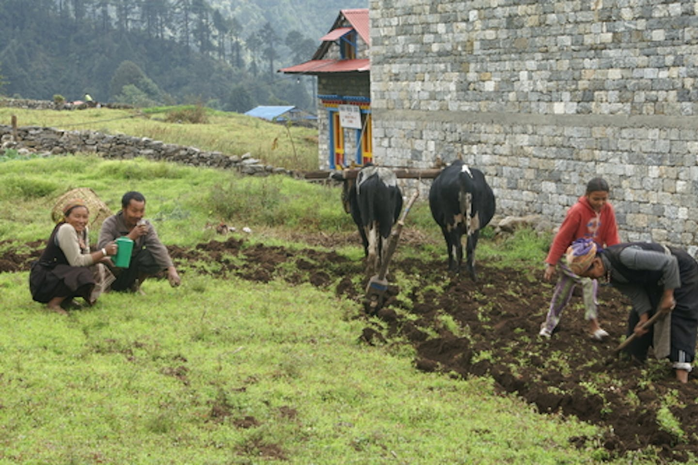 Family farming potatoes in Nepal