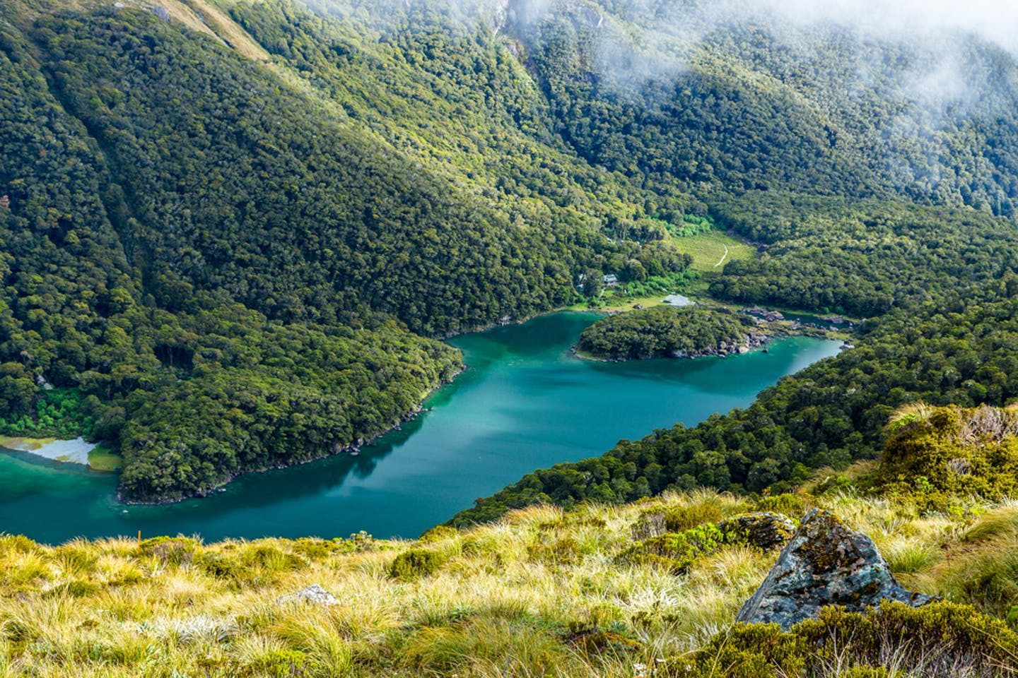 NZ south island forest