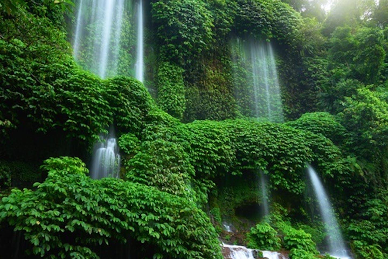 rainforest indo