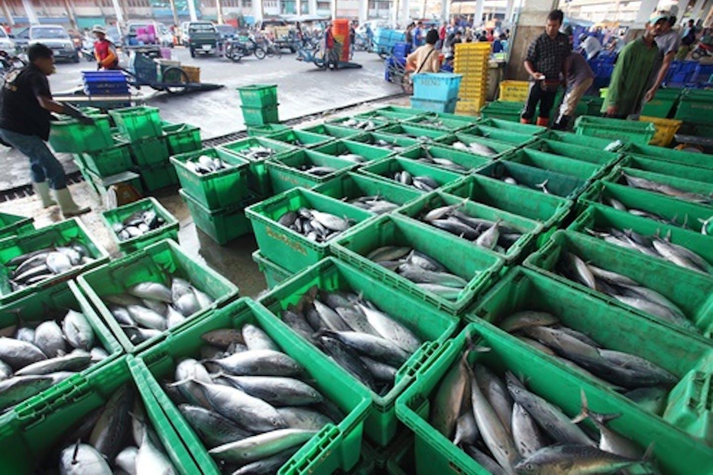 fishing port pattani