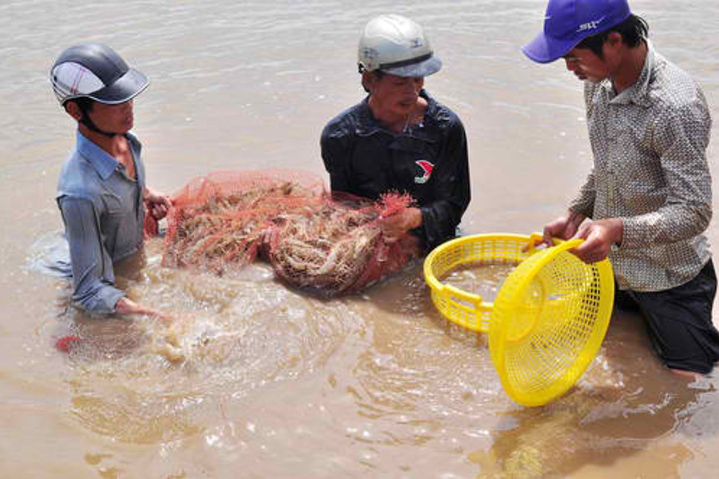 shrimp farming vietnam
