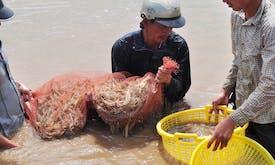 81,000 hectares of shrimp breeding ponds damaged