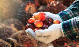 Expansion of oil palm plantations into forests appears to be changing local diets in Indonesia