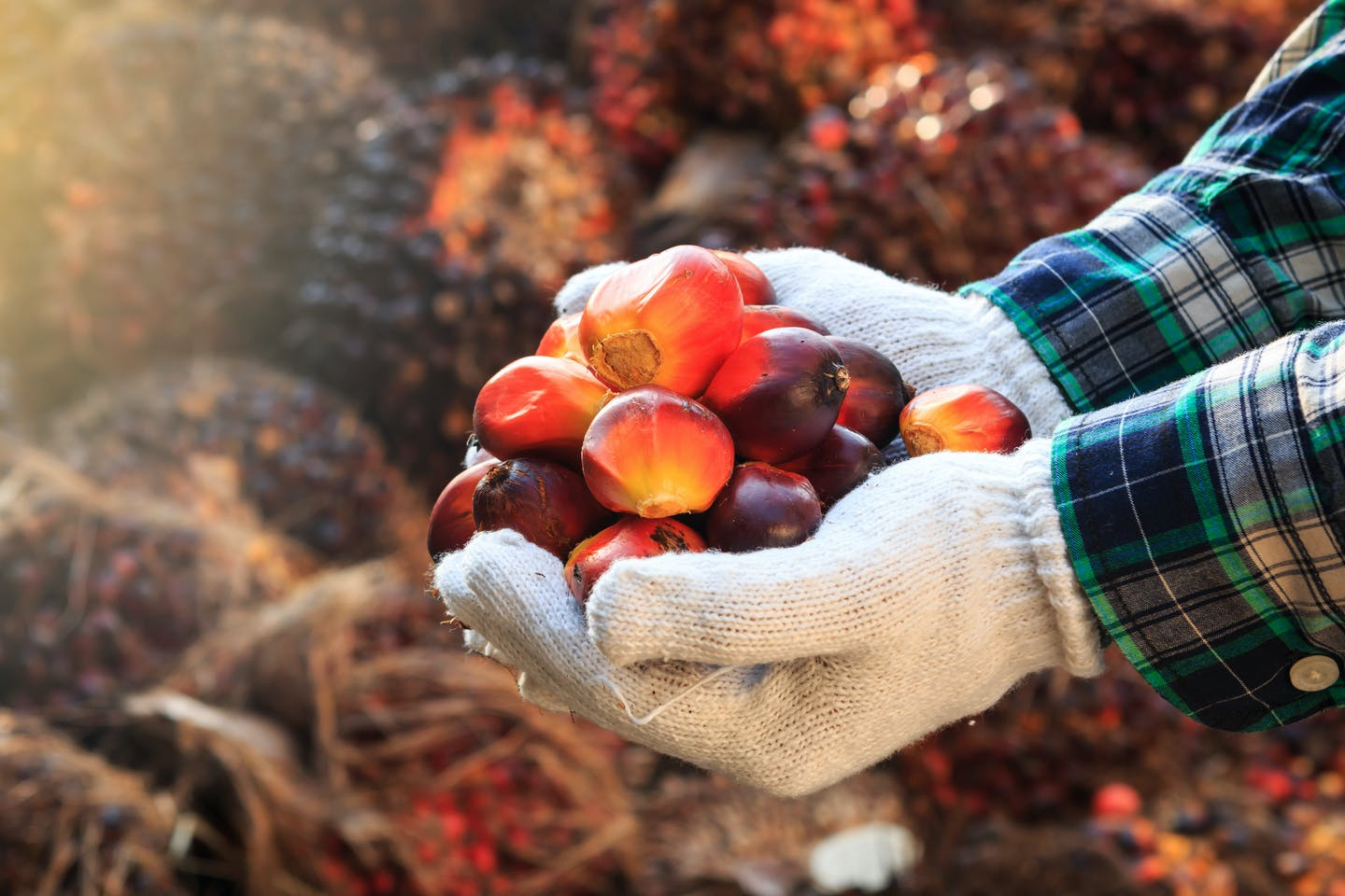 palm oil technology