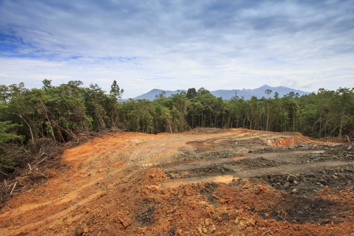 deforested mountains in borneo to give way to palm oil plantation