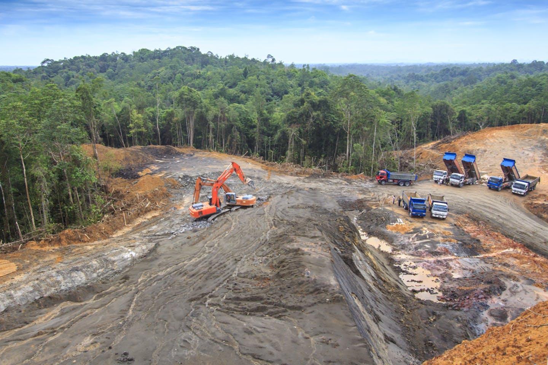 deforestation indonesia palm oil