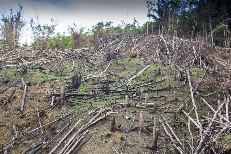 deforestation kuching malaysia