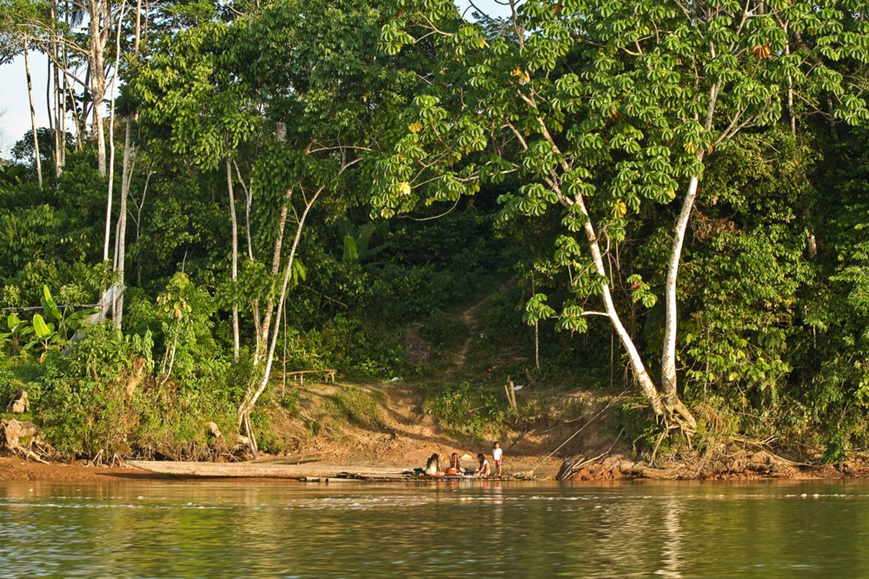 ecuador indigenous forest