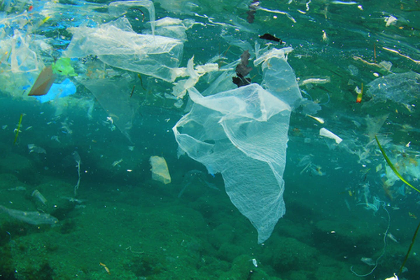 plastic pollution ocean