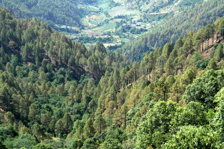 uttarakhand india forest
