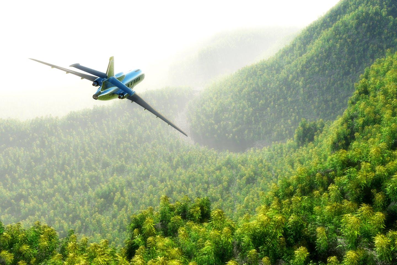 plane forest redd