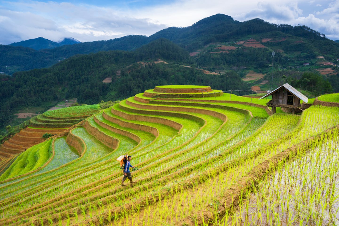 vietnam farmers fields