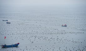 Can the WTO curb dangerous overfishing?