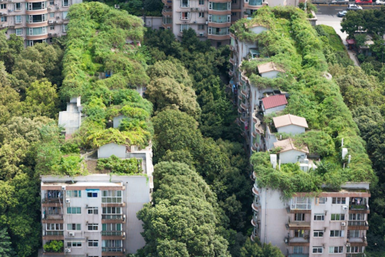 vegetation residential bldgs