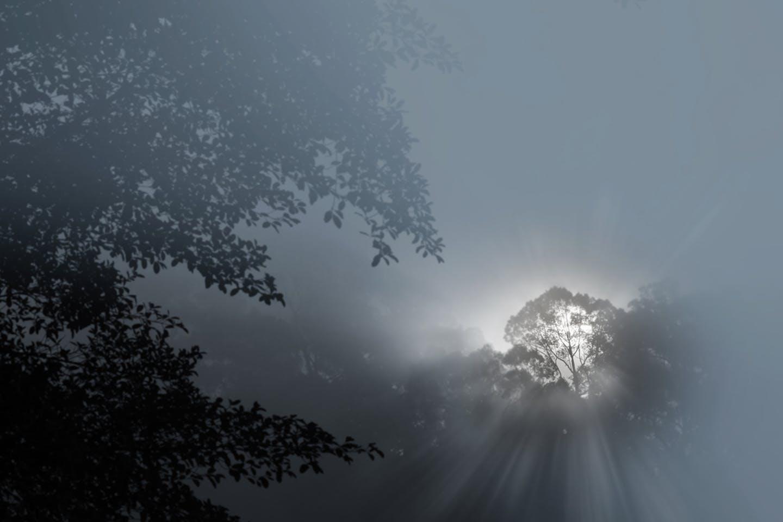 smoke forest haze indonesia