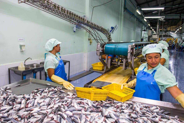 fishing factory thailand