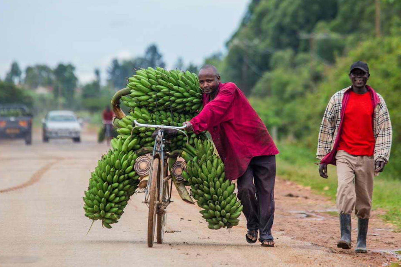 banana africa