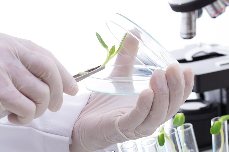biotech lab experiment