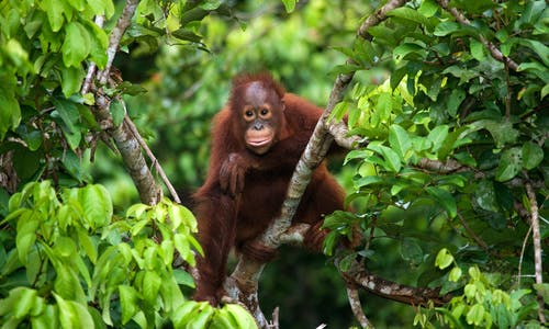 Safeguarding biodiversity is not just an environmentalist issue