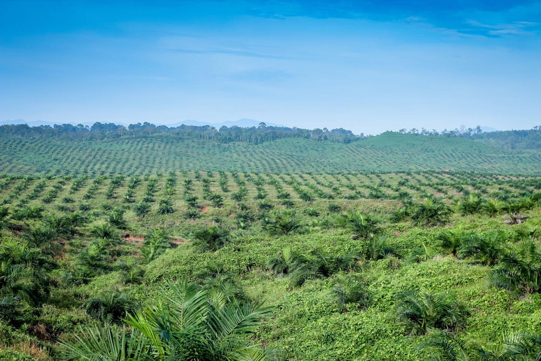 blue sky palm oil
