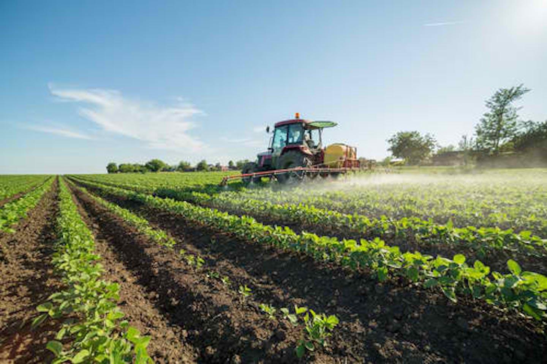 soybean field herbicides
