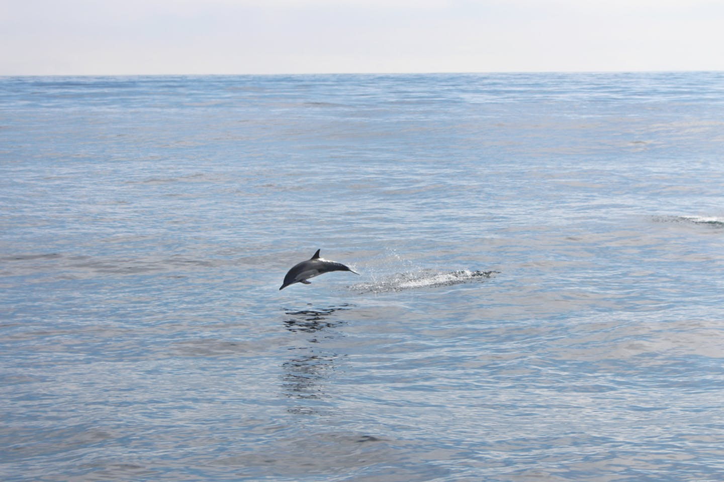 pacific ocean dolphin