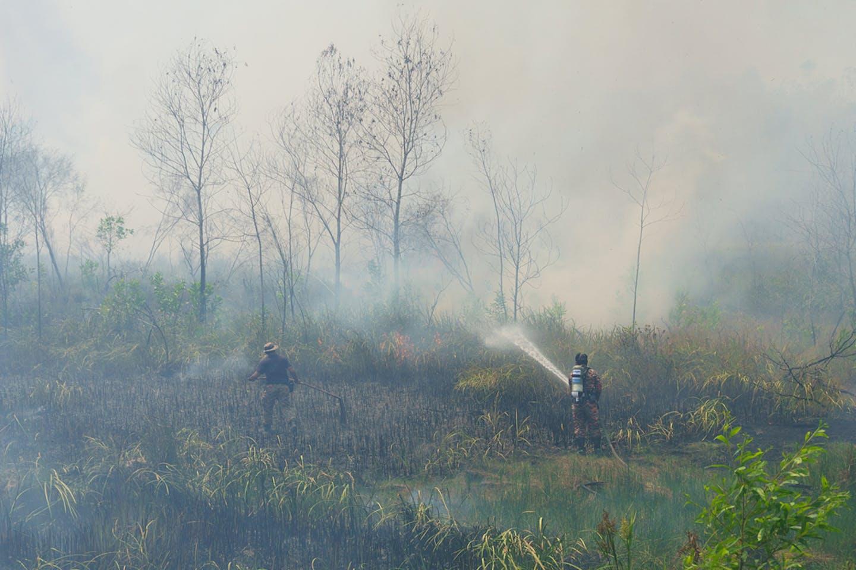 bush fires sabah march 2016