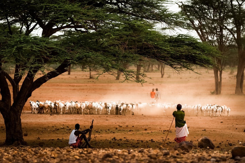 samburu kenya livestock