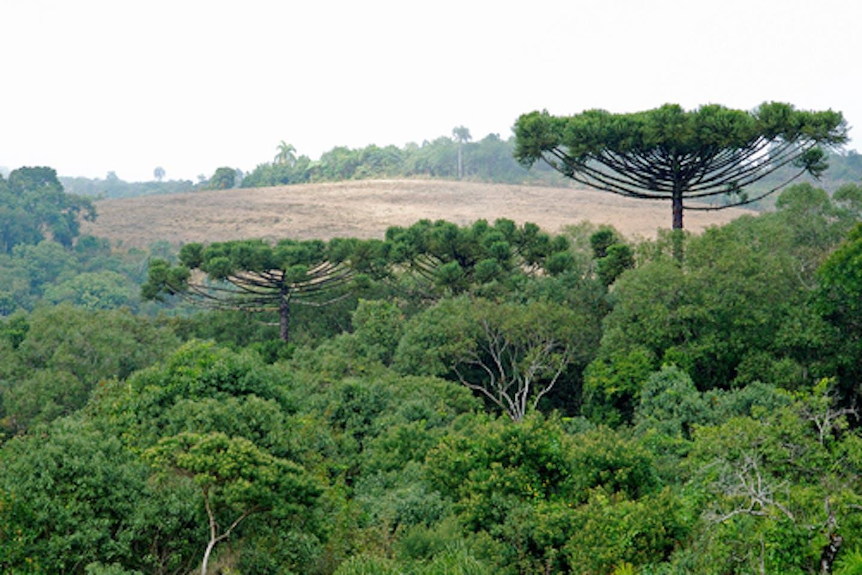 Brazil against deforestation