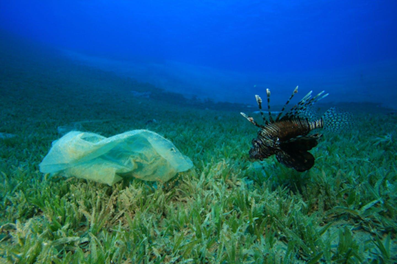 fish and plastics