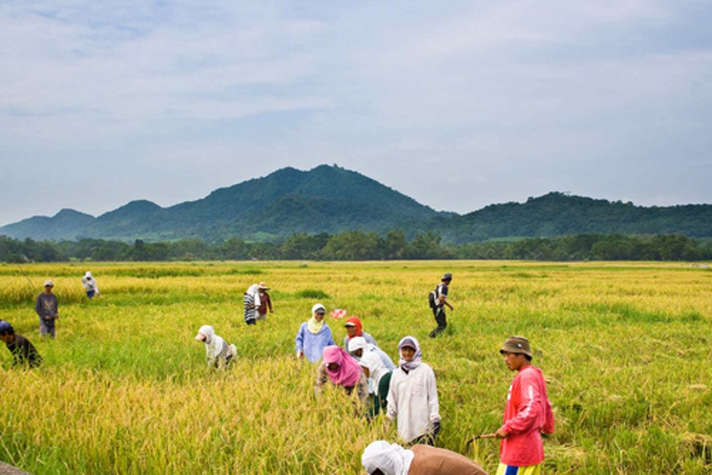 Farming community in the Philippines