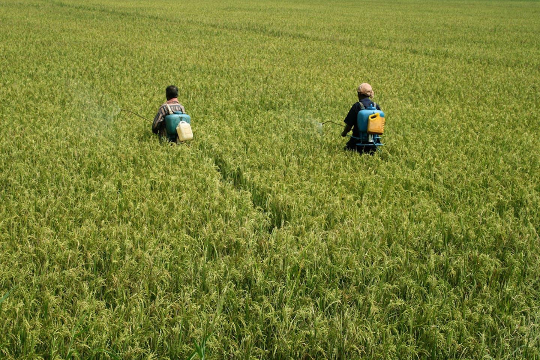 India spraying