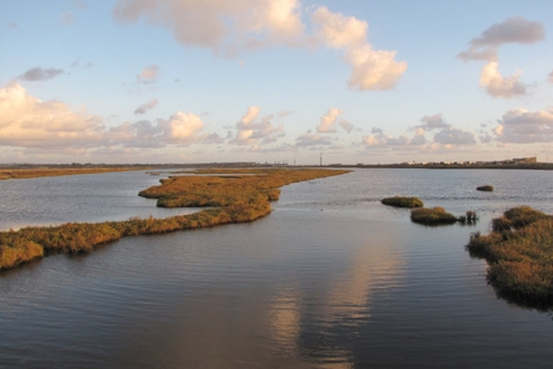 Coastal wetlands in the US