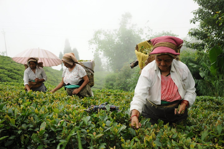 india farming monsoon