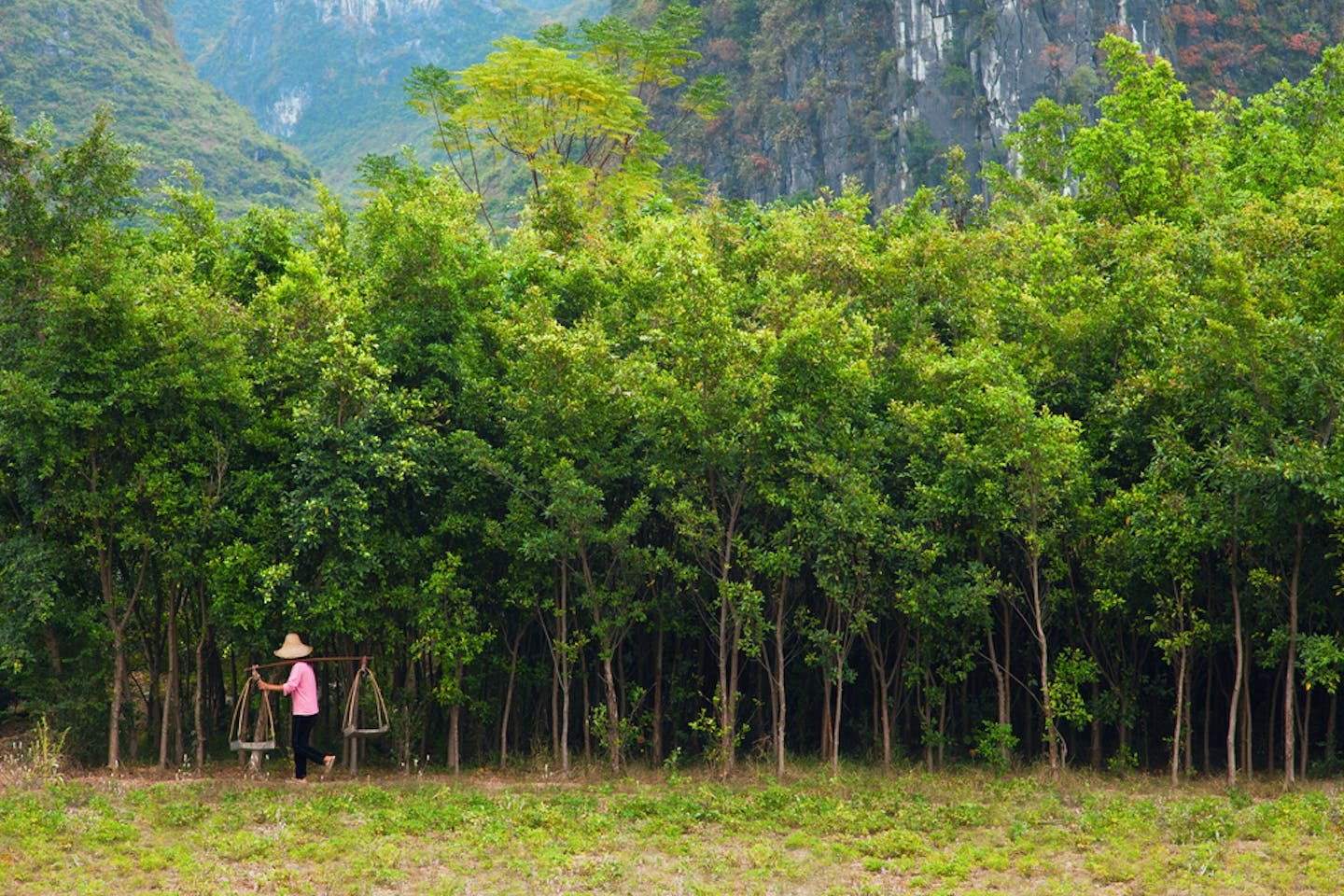 China's forest reforms