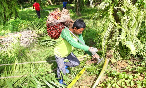 Inclusive business opportunities in the palm oil industry